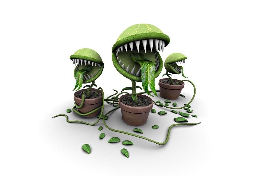 colère - plantes carnivores