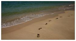 Empreintes sur la plage