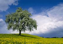 arbre dans la prairie