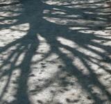 sciomancie - Ombres des branches