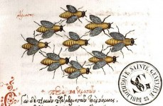 abeilles liber floridus