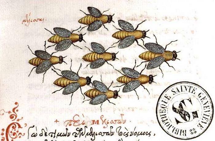 Berger d'abeilles