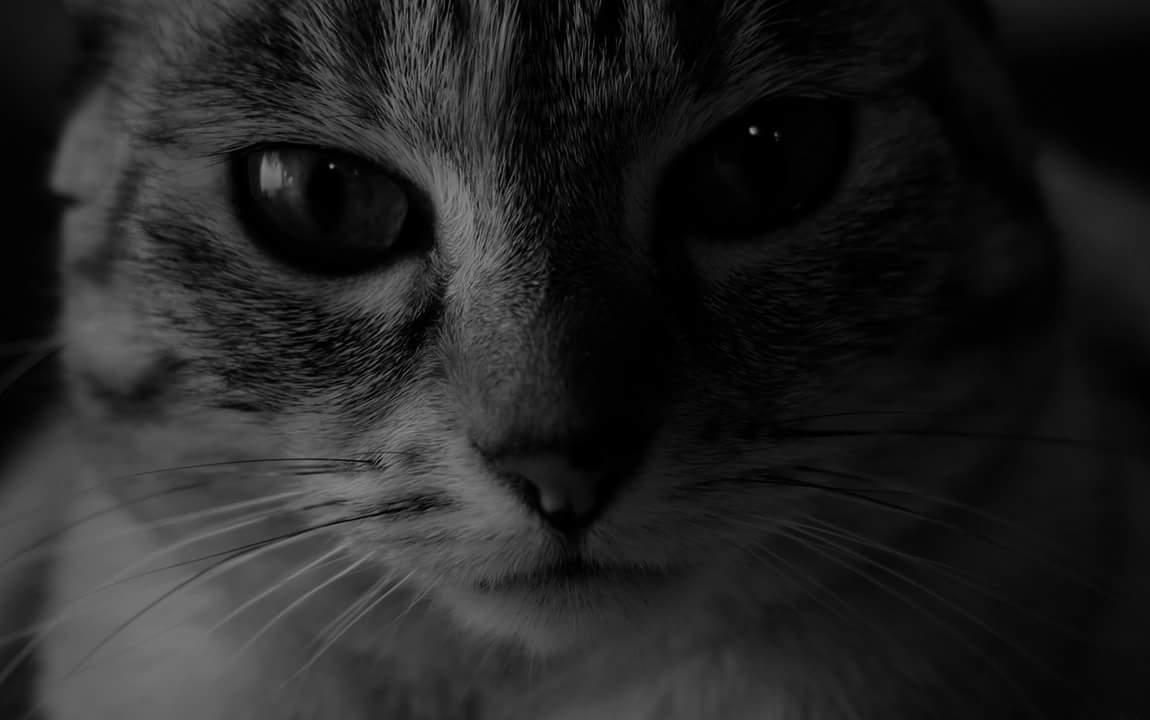 A un gato