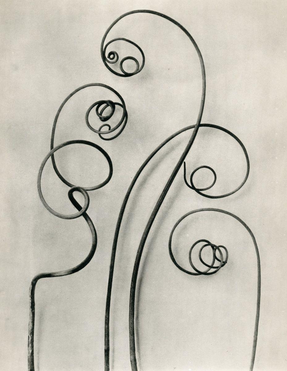 Langage des fleurs - Navet du diable, Karl Blossfeldt